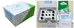 ELISA Kit for Epithelial Neutrophil Activating Peptide 78 (ENA78)